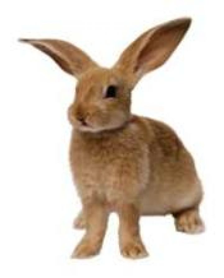 Signification-et-interpretation-de-rever-de-Lapin.jpg
